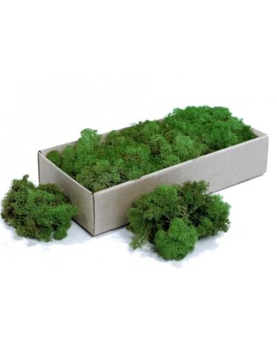 Chrobotek Moss Green Mech