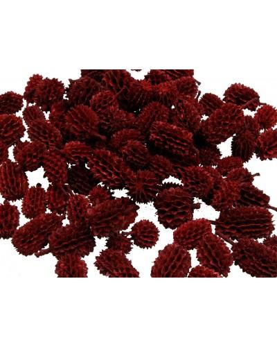 Szyszki Casurina Czerwona