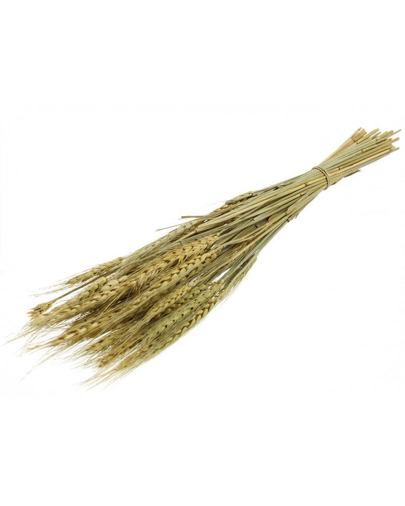 Kłos Trawa Suszona (75g) 40cm