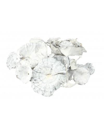 Grzyby suszone 5-8cm white wash 50g