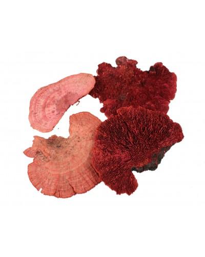 Grzyby suszone 18-25cm czerwone 4 szt.