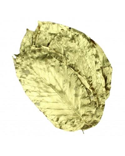 Liście salalu, suszone, złote 20 szt.