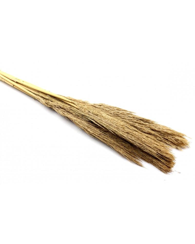 Trawa Sanmuga Grass Naturalna 80cm 10 szt.